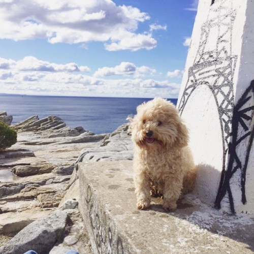 Pippin the Travel Dog